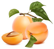 Apricots with leaves. Royalty Free Stock Photos
