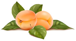 Apricots with leaves Royalty Free Stock Images