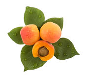 Apricots and leaves Stock Photos
