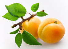 Apricots with leaves Stock Image