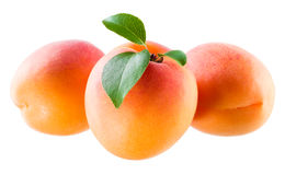 Apricots with leaves isolated on white Royalty Free Stock Image