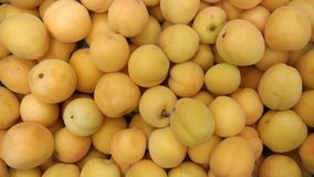 Apricots lined up at the grocery store. stock photos