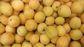 Apricots lined up at the grocery store. royalty free stock photos