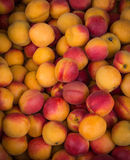 Apricots on market. Stock Images