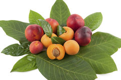 Apricots and peaches Stock Photos