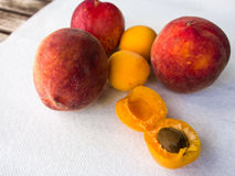 Apricots & Peaches. Fruits on the white background Stock Photos