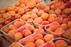 Apricots in the plastic boxes. Orange apricots in the plastic boxes stock photo