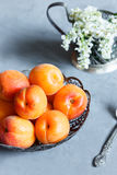 Apricots on the plate, white flowers, concrete background. Royalty Free Stock Image