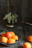 Apricots on the plate, white flowers, wooden background. Royalty Free Stock Image