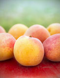 Apricots on red table Stock Image