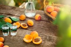 Apricots and shot glass with apricot brandy Royalty Free Stock Image