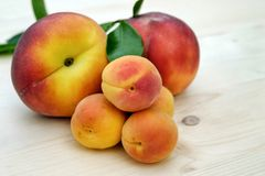 Apricots, Sugar Apricots, Peach Royalty Free Stock Images