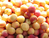 Apricots in sunlight Stock Image
