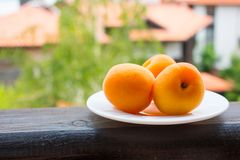 Apricots. Three Fresh Apricots on the white plate Stock Photos