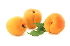 Apricots with twig isolated on white Royalty Free Stock Photography