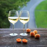 Apricots and two glasses of the white wine, on a wooden background stock photos