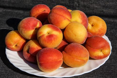 Apricots on a white plate. Large sweet ripe apricots lying on a white plate. Healthy food royalty free stock images