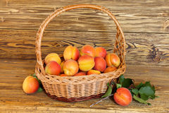 Apricots in a wicker basket Stock Photography