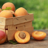 Apricots in a wooden box Stock Photos