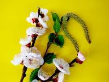 Aprikors för vita blommor på en gul bakgrund och turkosörhängen royaltyfri foto