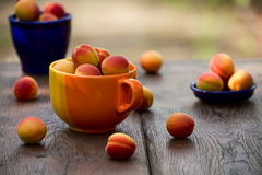 Aprikors i en keramisk bunke Fotografering för Bildbyråer