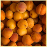 Aprikors i en korg Arkivbilder