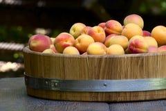 Aprikors i en träbunke Royaltyfria Foton