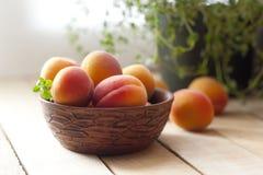 Aprikors i keramisk kopp Selektivt fokusera Arkivfoton