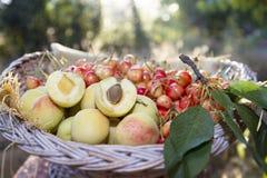Aprikors och körsbär i korg Arkivbild