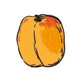 Aprikos - handen drog frukter isolerade vektorn Arkivbild