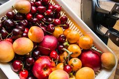 Aprikos, körsbär och äpplen i en korg Royaltyfri Fotografi