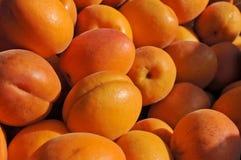 Aprikosar på bonde marknad Royaltyfria Bilder