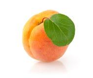 Aprikose Stockbilder