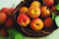aprikose lizenzfreie stockbilder