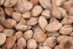 Aprikose bildet in der Asche, Zartheitsnuß Löcher stockfotografie