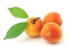 Aprikosen. stockbild