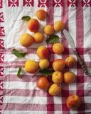 Aprikosen auf einem roten Tuch Lizenzfreie Stockfotografie