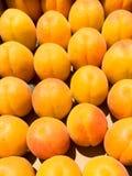 Aprikosen, die in einem Kasten sitzen Stockbilder