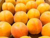 Aprikosen, die in einem Kasten sitzen Lizenzfreie Stockfotos