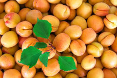 Aprikosen an einem Landwirtmarkt Lizenzfreie Stockfotos