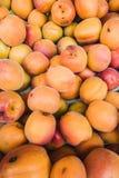 Aprikosen in einem Markt Lizenzfreie Stockfotografie
