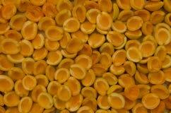 Aprikosen, Löcher gebildet, Garten, Sommer, sonnig Stockbilder