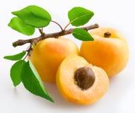 Aprikosen mit Blättern Lizenzfreies Stockbild