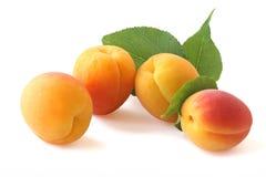 Aprikosen mit dem Zweig lokalisiert auf Weiß Lizenzfreie Stockfotos