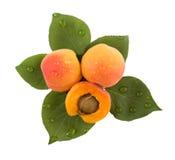 Aprikosen und Blätter Stockfotos