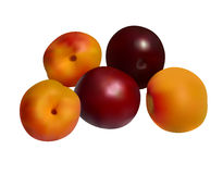 Aprikosen und Pflaumen auf Weiß Lizenzfreies Stockfoto