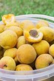 Aprikosen werden in einem Eimer gesammelt Lizenzfreie Stockfotografie