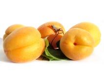 Aprikosenaufbau Stockbilder