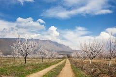Aprikosenbauernhof während der sping Jahreszeit gegen Vayk-Gebirgszug, Wajoz Dsor Provinz, Armenien lizenzfreies stockbild