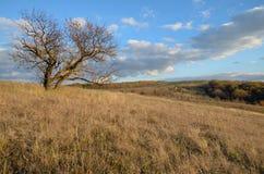 Aprikosenbaum im Herbst auf einem Gebiet auf einem Hügel auf einem Hintergrund des szenischen Himmels Lizenzfreie Stockfotografie